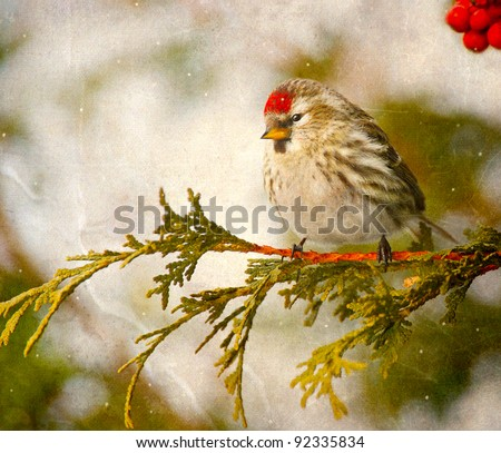 Vintage Christmas card with a redpoll in winter in the snow and copy space.