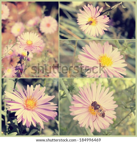 Vintage collage. Autumn flowers. Art floral background with paper texture overlay. Retro style. - stock photo