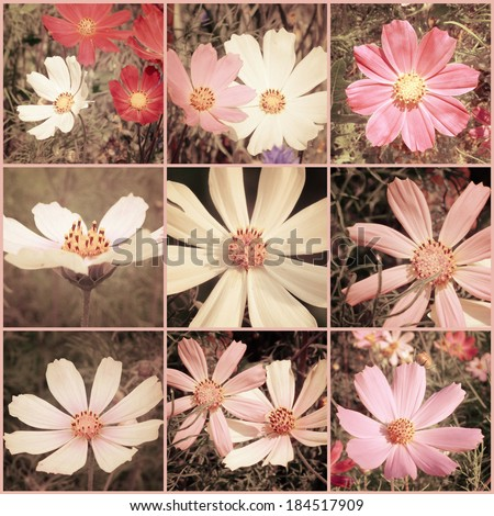Vintage collage. Cosmos flowers. Art floral background with paper texture overlay. Retro style. - stock photo