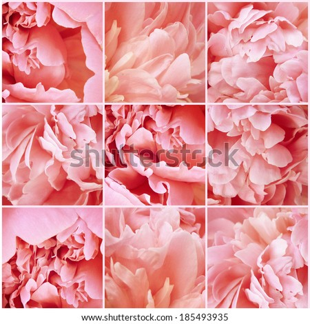 Vintage collage. Flowers. Peony pink petals. Art floral background with paper texture overlay. Retro style. - stock photo