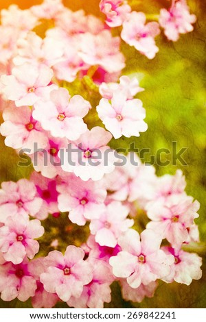 vintage color flowers on mulberry paper texture - stock photo