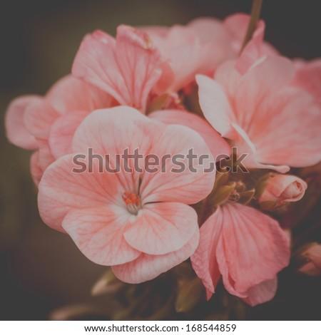 Vintage delicate flower - stock photo