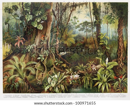 Vintage drawing of tropical forest plants from the beginning of 20th century period - Picture from Meyers Lexicon books collection (written in German language) published in 1908, Germany. - stock photo