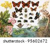Vintage drawing representing various species of insects and butterflies - Picture from Meyers Lexicon books collection (written in German language ) published in 1906 , Germany. - stock photo