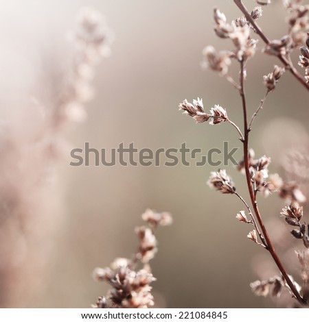 vintage dry meadow plant background - stock photo