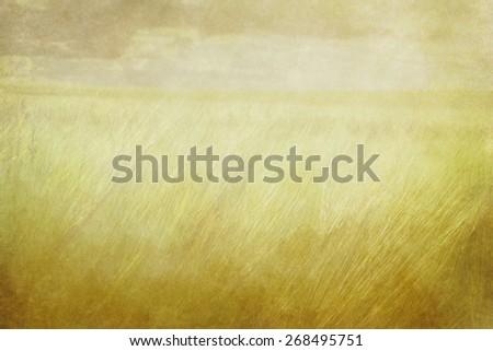 vintage fields background  - stock photo
