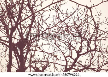 Vintage filter: looking up at silhouette tree branches. - stock photo