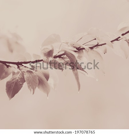 vintage filtered branch with leaves background instagram style