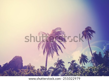 Vintage filtered picture of faded palms with flare effect. - stock photo