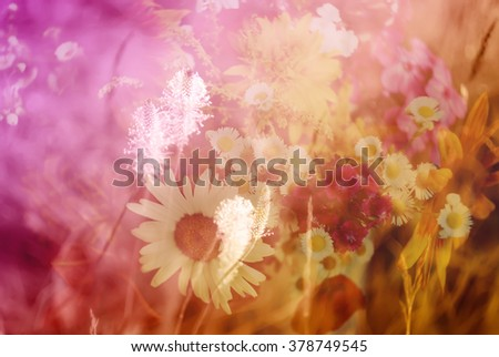 Vintage floral background. Layer overlay effect. Wildflowers.