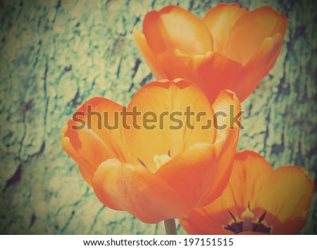 Vintage floral background. Tulips flowers with retro filter effect. - stock photo