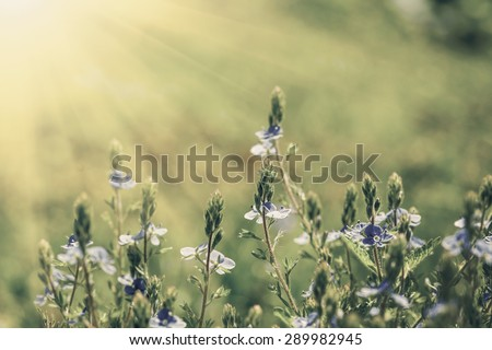 Vintage flower field on the sky. nature abstract - stock photo