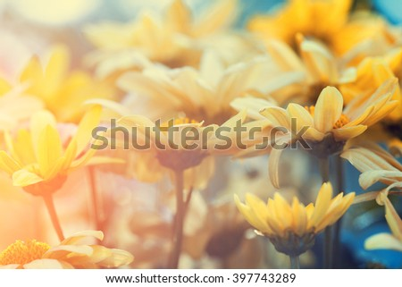 Vintage flower lawn for background - stock photo