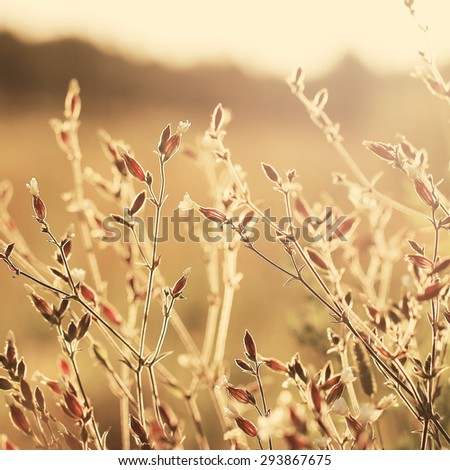 vintage flowers - stock photo