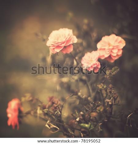 Vintage Flowers - stock photo