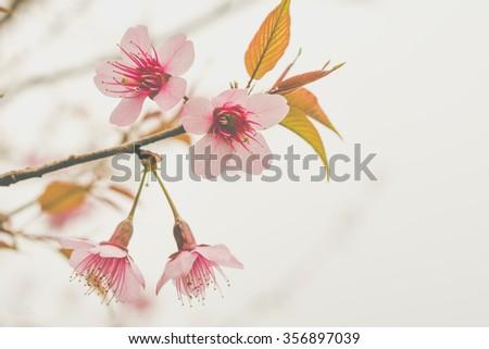 Vintage Flowers flower, rose, floral, background - stock photo