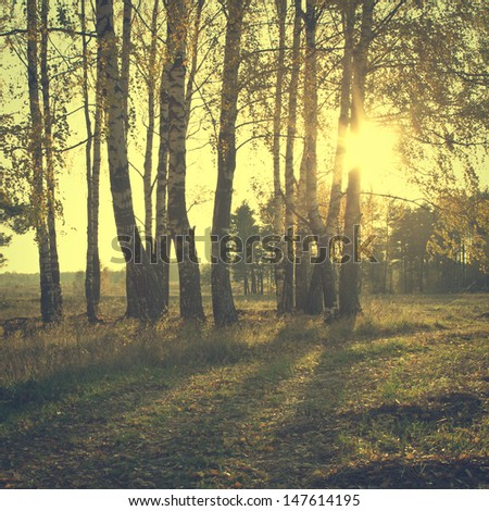 Vintage forest  - stock photo