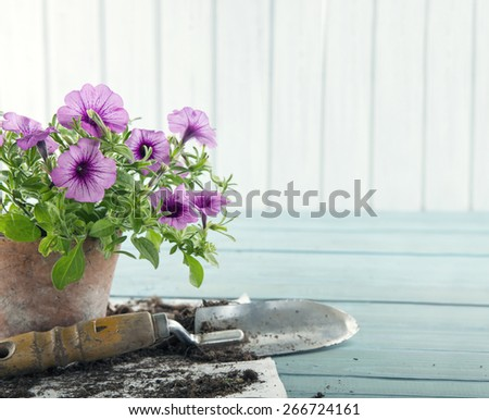 Vintage garden tools and purple flowers in terracotta flower pots - concept for gardening - stock photo