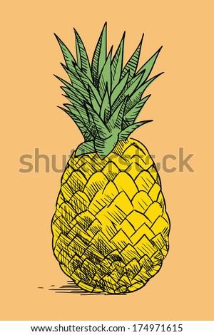 vintage hand drawn pieapple, tropical fruit - stock photo