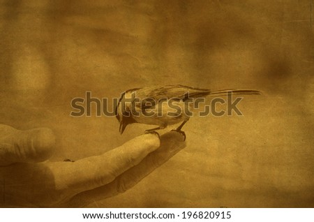 vintage image of bird perched on a hand with bird seed - stock photo