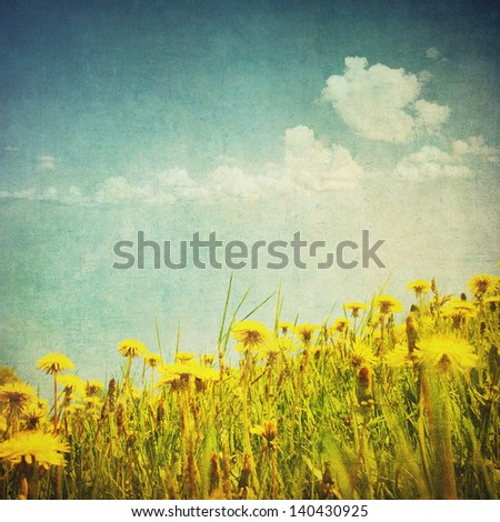 vintage image of dandelion field - stock photo