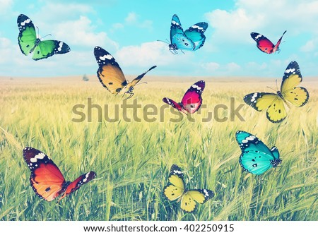 Vintage image with colorful beautiful butterflies's flight on a wheat field landscape background.Nature summertime abstract. Warm toned effect.vintage retro instagram style   - stock photo