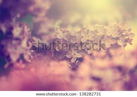 Vintage lilac - stock photo