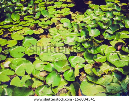 Vintage looking Water lily Nimphaea in a pond - stock photo
