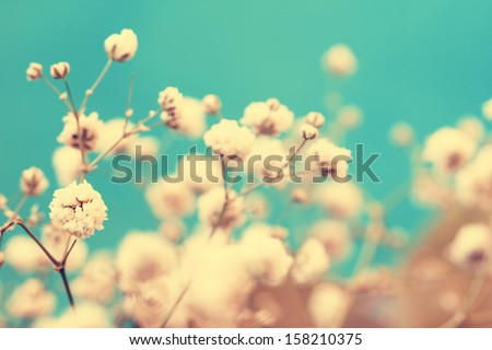 vintage lovely small white flower buds close up - stock photo