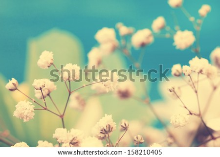 vintage lovely small white flowers close up - stock photo