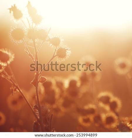 vintage meadow plants at sunrise in morning