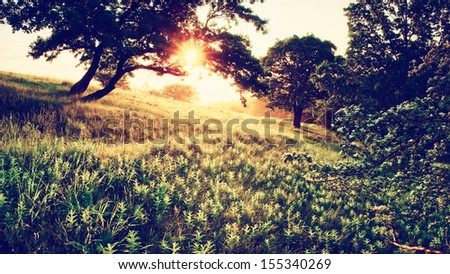 Vintage morning in the forest - stock photo