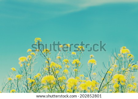 Vintage nature background  - stock photo