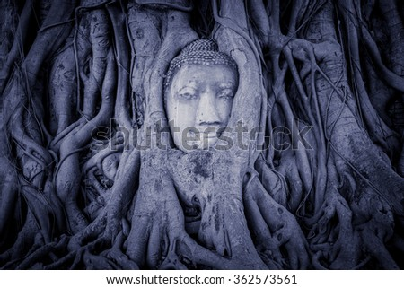 Vintage of Head of Buddha statue in the tree roots at Wat Mahathat, Ayutthaya, Thailand. - stock photo
