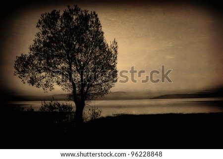 vintage old picture with alone tree in lake