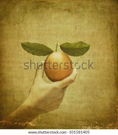 Vintage orange in female hand - stock photo