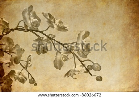 Vintage orchid wallpaper - stock photo