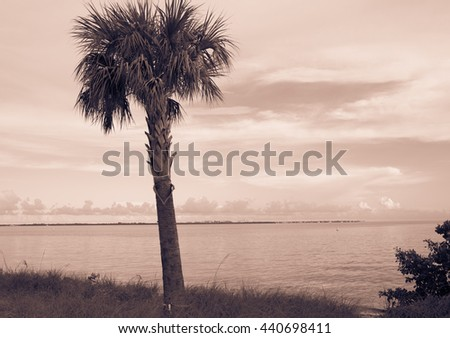 vintage palm background on the Pacific ocean. Miami. Florida. USA