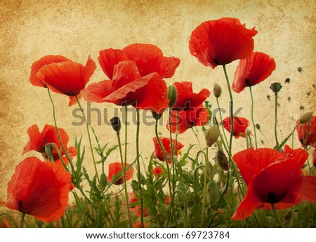 vintage paper textures. Field of poppies - stock photo
