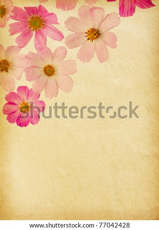 vintage paper textures with  cosmea - stock photo