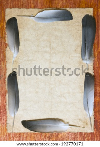 vintage paper with beautiful feathers - stock photo