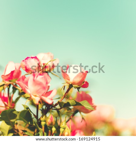 Vintage Pastel Roses - stock photo