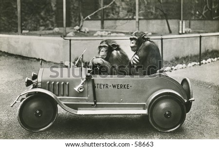 Vintage photo, circa 1900 of two chimps in a midget car - stock photo
