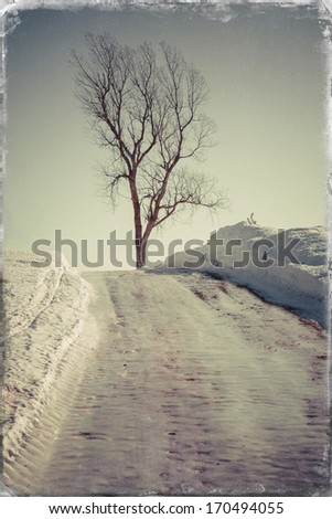 Vintage photo of a long ice covered country road with a lone poplar tree.  - stock photo