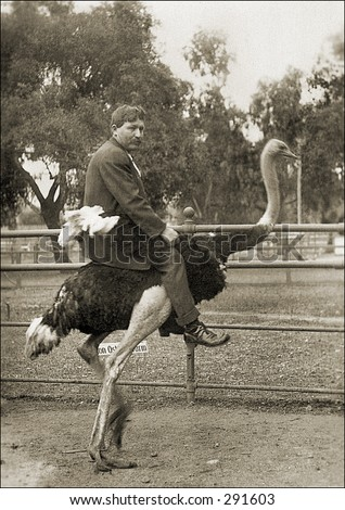 Vintage photo of a Man Riding Ostrich - stock photo