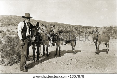 Vintage photo of a Prospector And Mules - stock photo