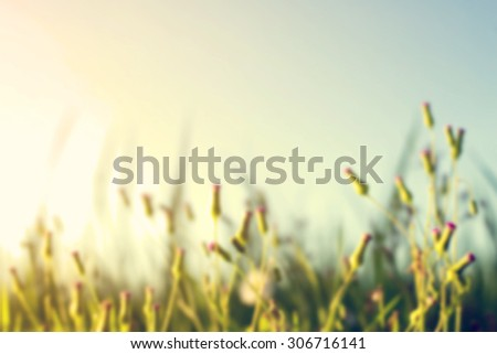 Vintage photo of abstract nature blurred background with wild flowers and plants dandelions