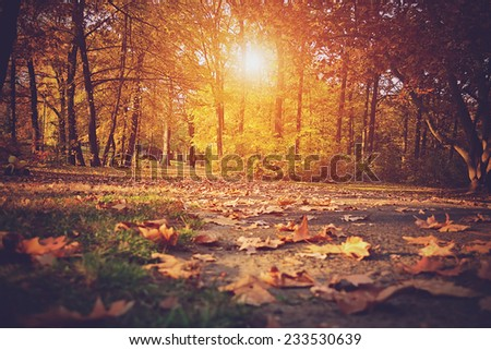 Vintage photo of autumn forest, detail - stock photo