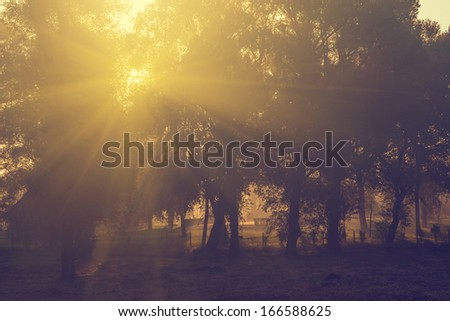Vintage photo of autumn forest in sunrise