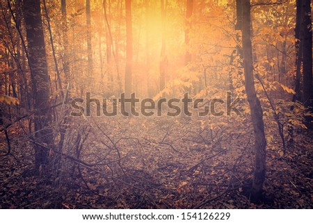 Vintage photo of autumn scene - stock photo